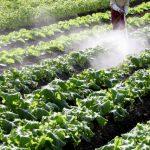 野菜果物の鮮度を保ち汚れ落としに最適!ベジセーフの効果とは??